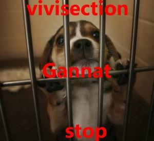 Tous ensemble contre la vivisection ce samedi 19 janvier 2013 vivi-3